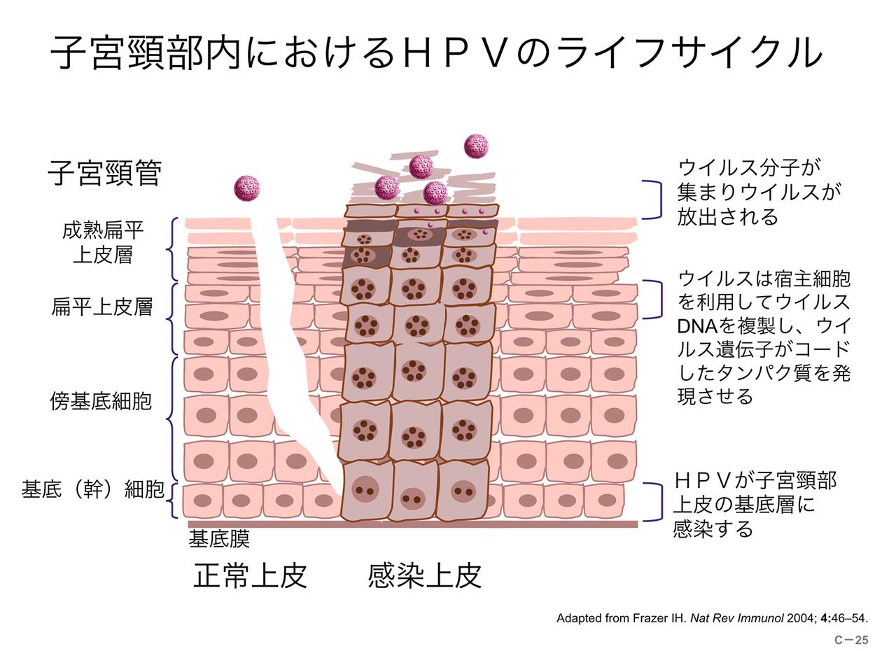 ウイルス ヒトパピローマ